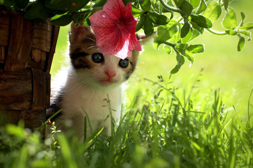 Cute Cats And Kittens Wallpaper Hd Cat Themes 30 Innocent And Cute Cat Pictures Themes Company