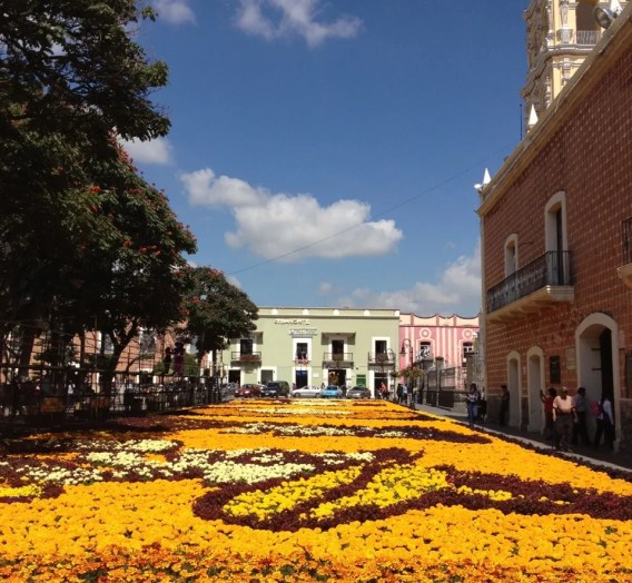 A flower carpet, shaped with Day of the Dead skeletons, in Atlixco, Puebla. Photo by me.