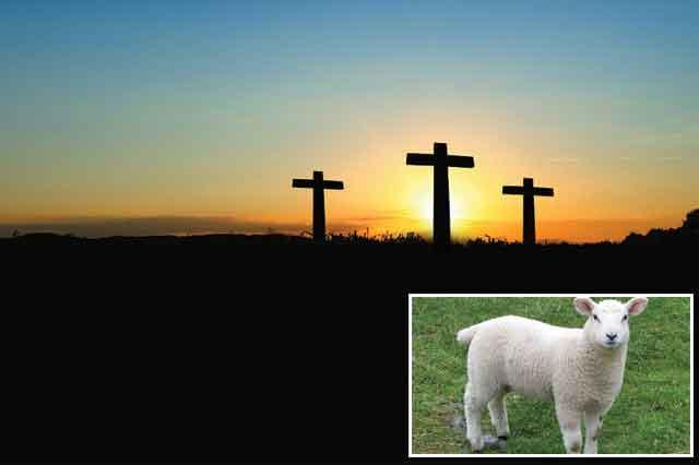 the-bestest-lamb