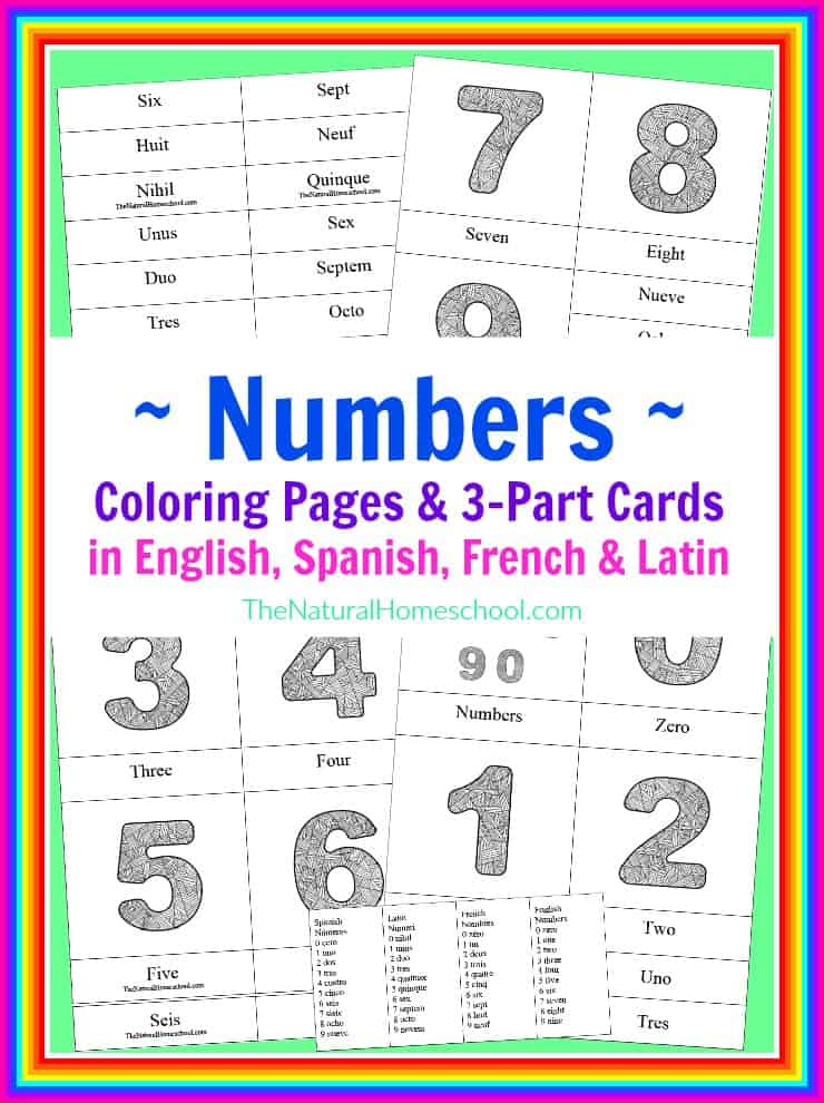 Number Coloring Pages  3 Part Cards in 4 Languages {Printable