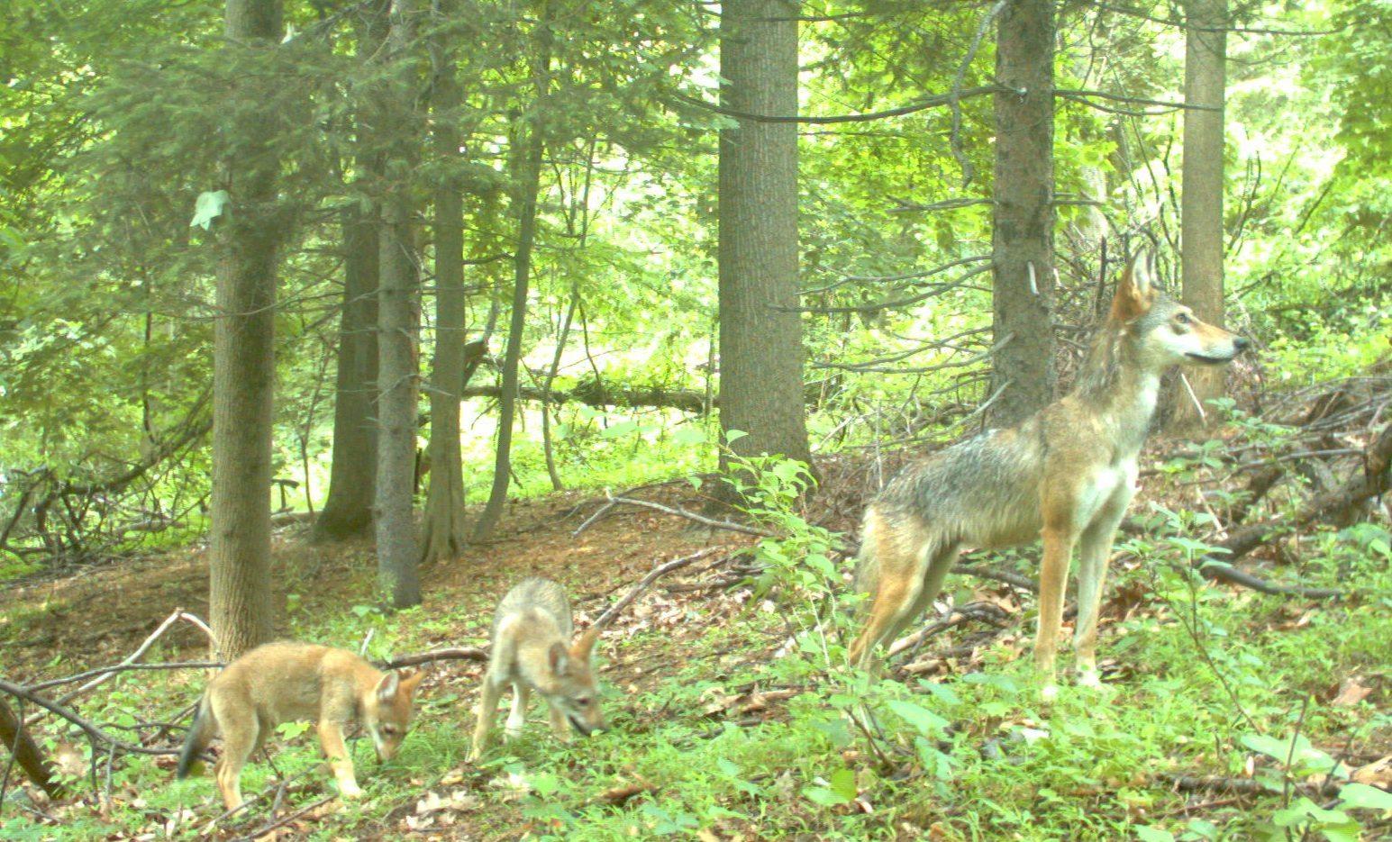 Essay Forest Wildlife