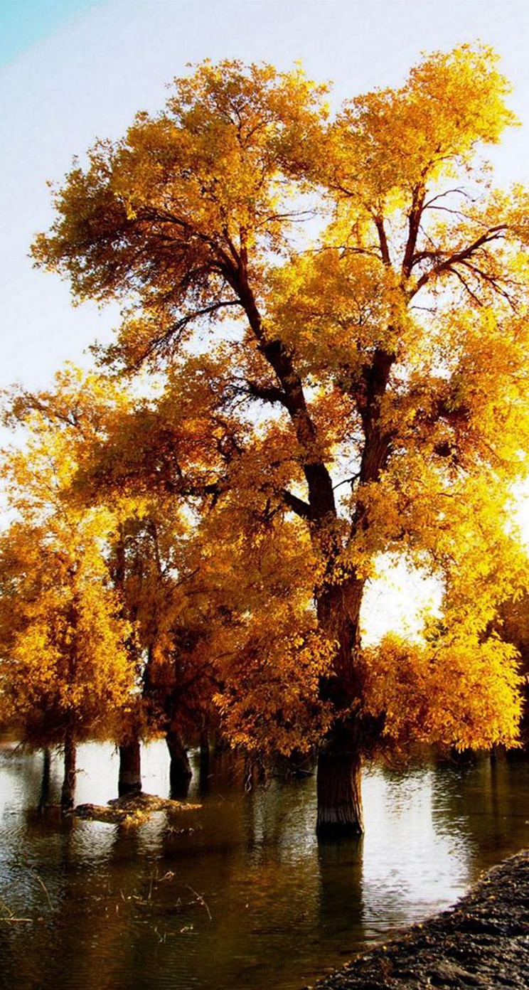 Fall Leaves Wallpaper Iphone Awesome Autumn Wallpapers For Your Iphone Hd The Nology