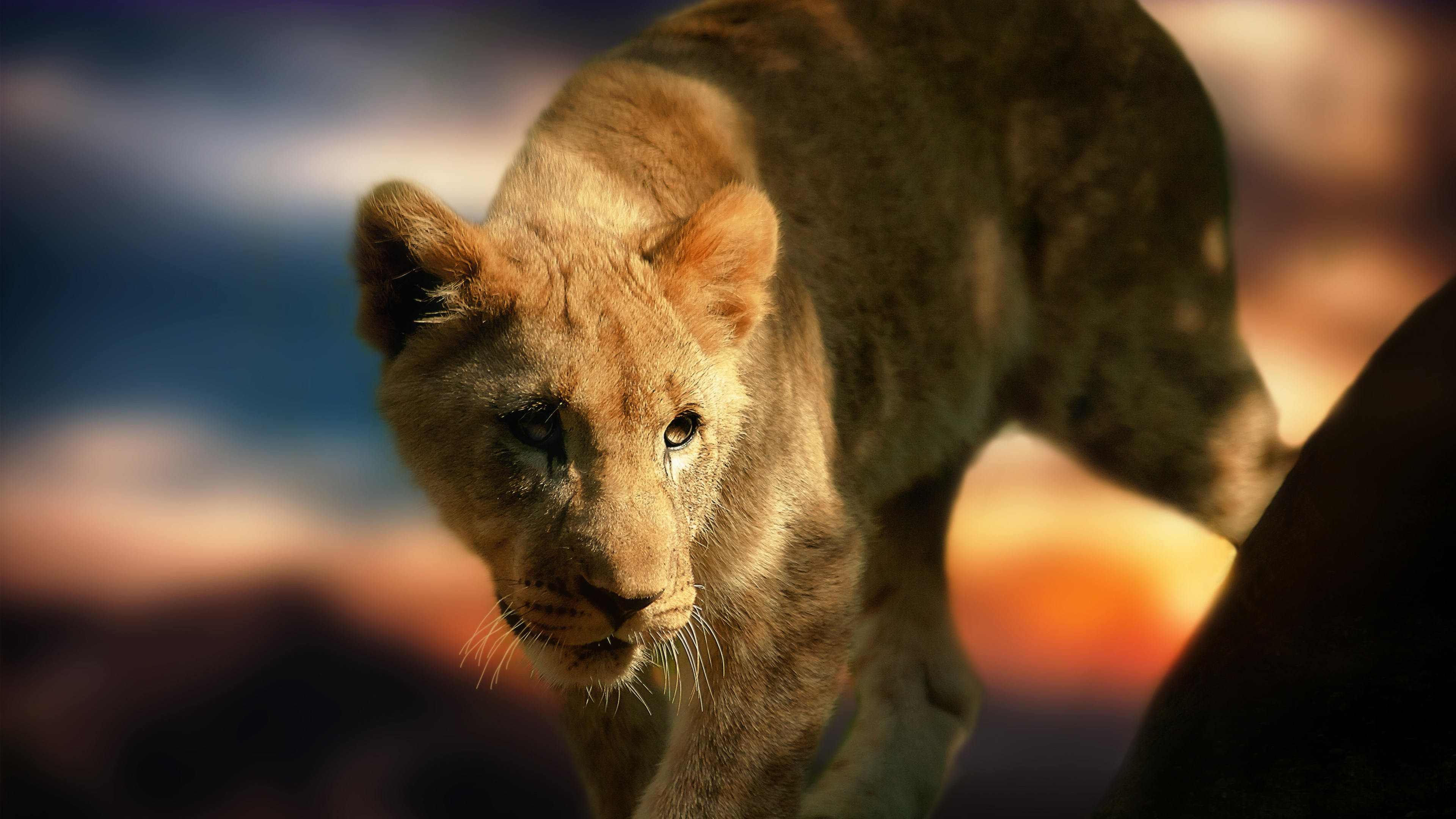 Jungle Animal Wallpaper 20 Cool 4k Wallpapers The Nology