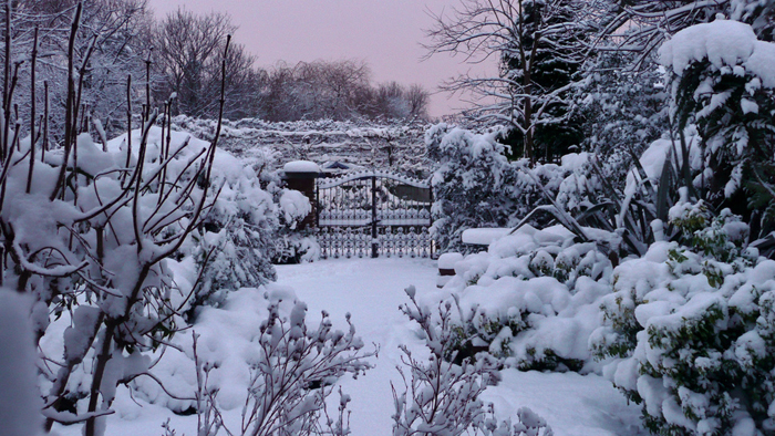 Iphone 5 Falling Snow Wallpaper Snowy Scene