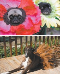 Pooches_web