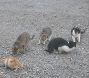 cats_web