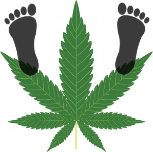 Bigfoot hunter accused of looking for marijuana in Toronto