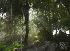 ForestTease
