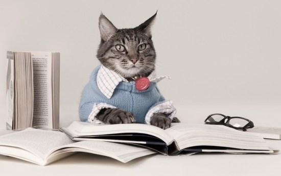 cat reading (2)