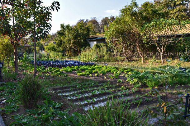 Organic Farm at Aahana Resort in Jim Corbett National Park