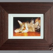 Small Framed Tabby Cat Print