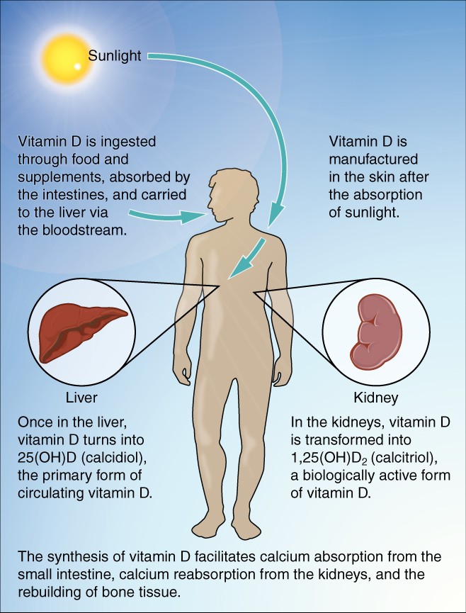 Fructose and Vitamin D Deficiency The Perfect Storm? ~ The Paleo Mom