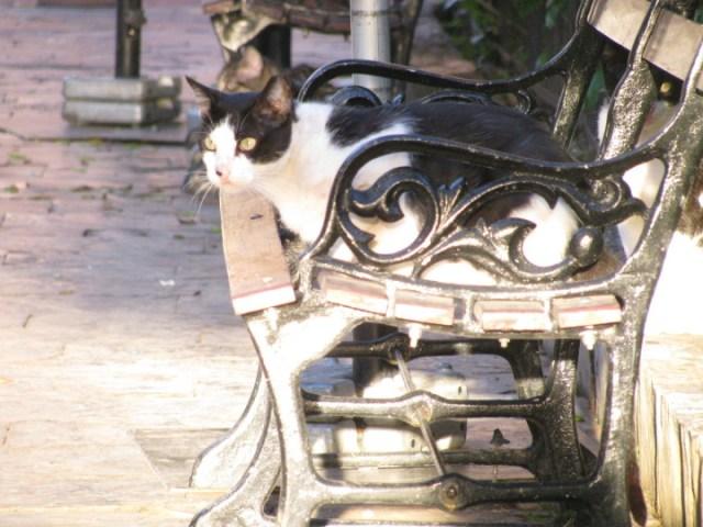 Casco bench
