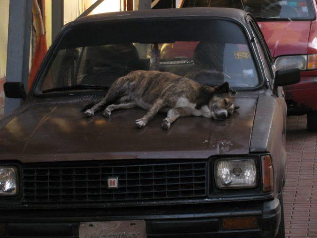 sleeping on a car