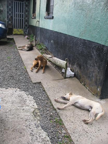 three dog nap