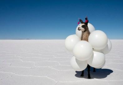 llama-white-balloons