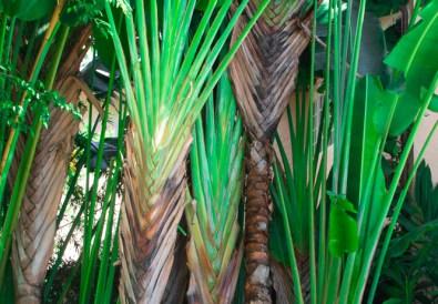 the brazilian court hotel palm beach-7