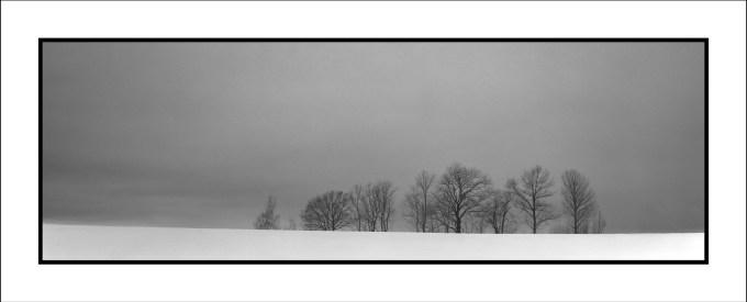 """""""Trees"""" - 6x17"""
