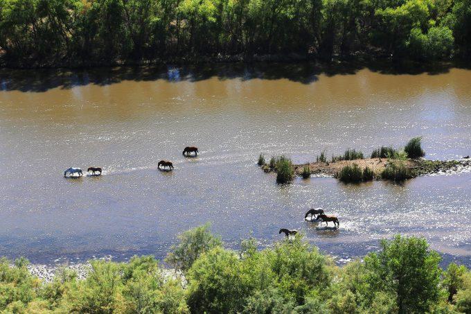 Wild horses, Rio Verde, AZ 2