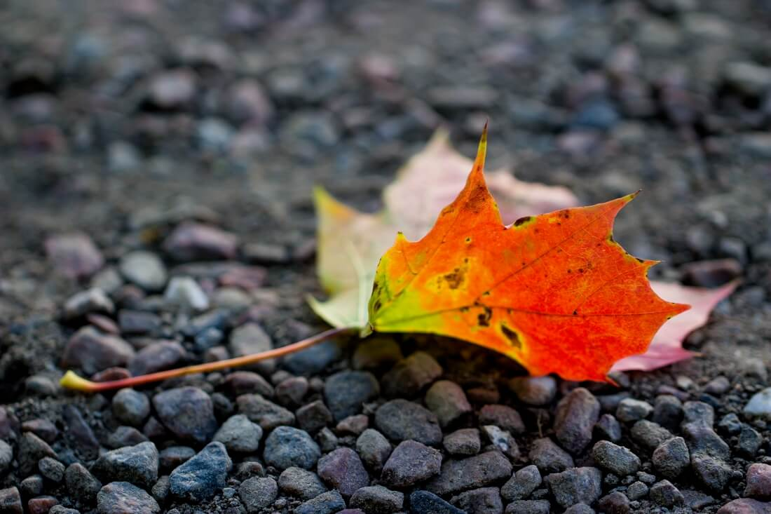Autumn Leaves Falling Hd Wallpaper 60 Breathtaking Fall Images For Your Inspiration