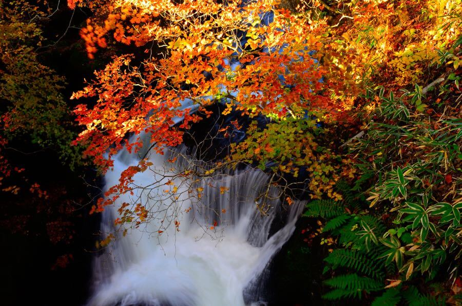 Wallpaper Leaves Falling 25 Beautiful Autumn Waterfall Pictures