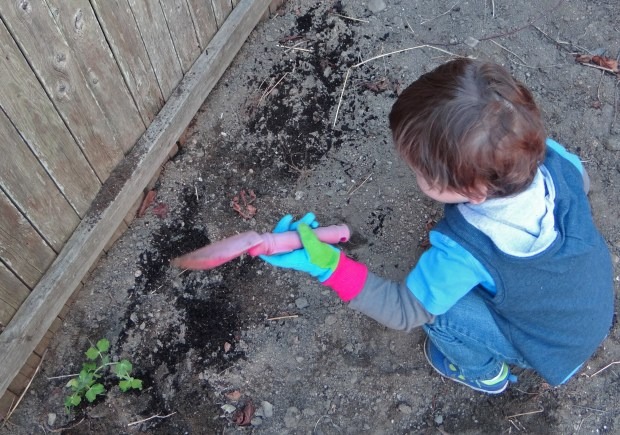 Lucas loved digging in the dirt.  He especially loved his Mickey Mouse gardening gloves!