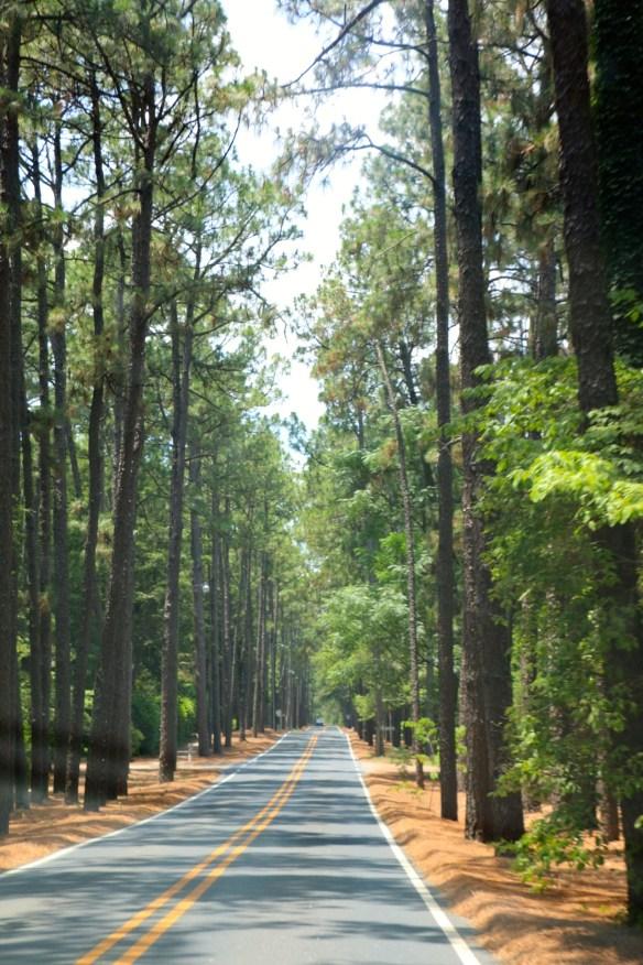 Pinehurst NC trees