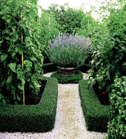 Boxwood Hedges and Lavender