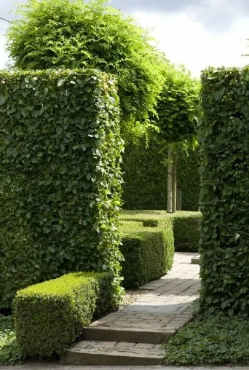 Boxwood Hedges by a Dutch Garden Company