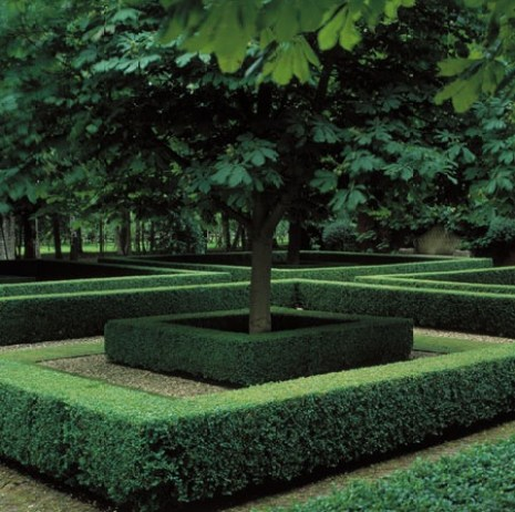 Perfectly Shaped Boxwoods by Orlando Greener