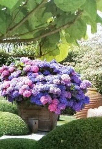 Purple shades of hydrangeas via flowers gardens love