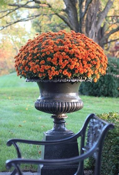 Potted Urn of Mums