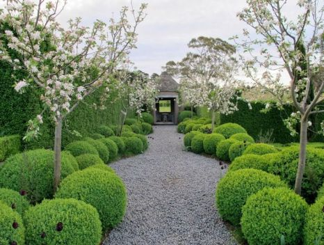 Winding balls of boxwood with pea gravel by Paul Bangay