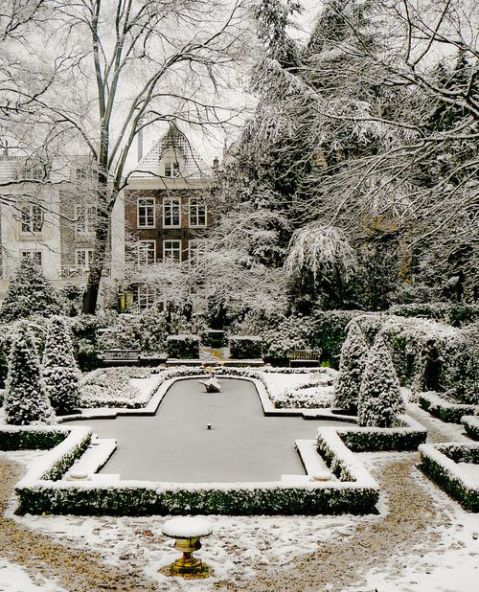 A dreamy and dreary winter garden