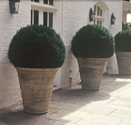 Welcome to The Potted Boxwood