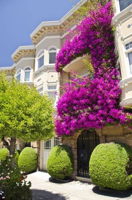 bougainvillea covering the exterior of a home via House Beautiful