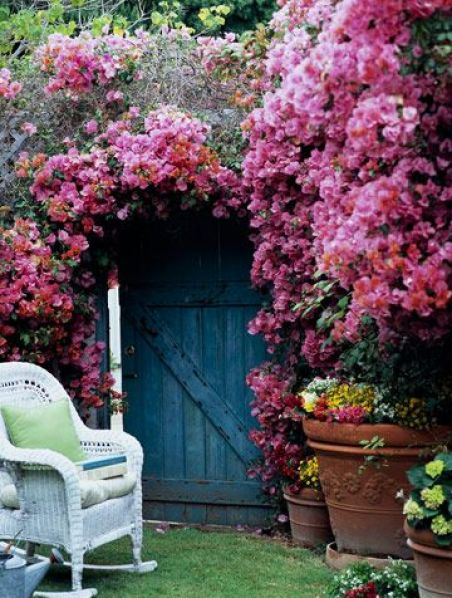 bougainvillea in abundance via BHG