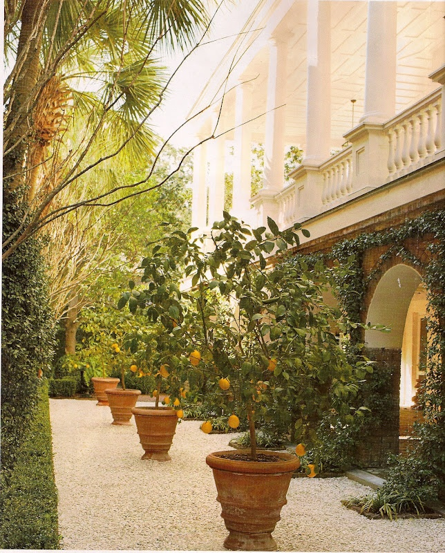 This Gil Schafer Designed Home Has A Beautiful Display Of Potted Lemon Trees  In A Row.