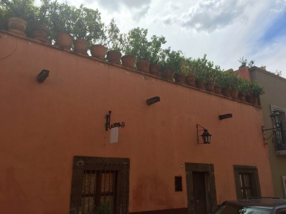 San Miguel de Allende The Potted Boxwood 92