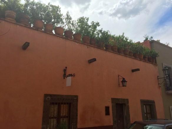 San Miguel de Allende The Potted Boxwood 92