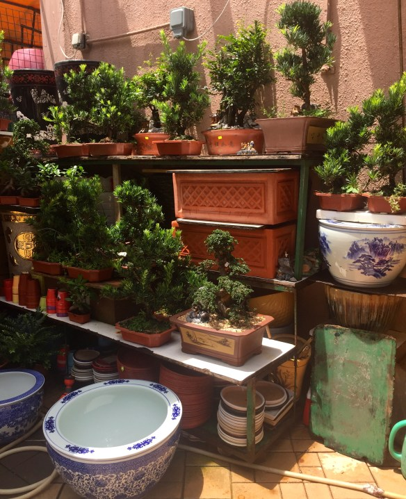 The Flower District in Hong Kong via The Potted Boxwood 4
