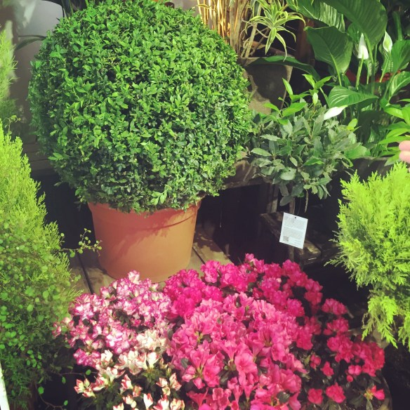 The Flower District in Hong Kong via The Potted Boxwood 8