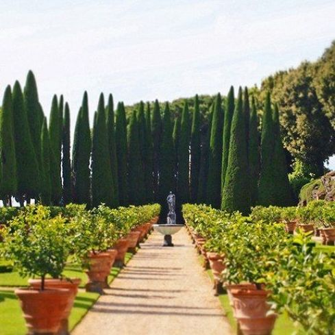 potted orange trees and cypress via AD