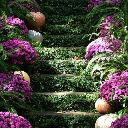 gorgeous-pumpkins-and-vines-via-pinterest