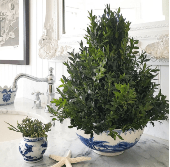 blue-and-white-and-christmas-boxwood-design-by-kelli-delaney-of-kd-hamptons