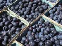 Blueberry 107