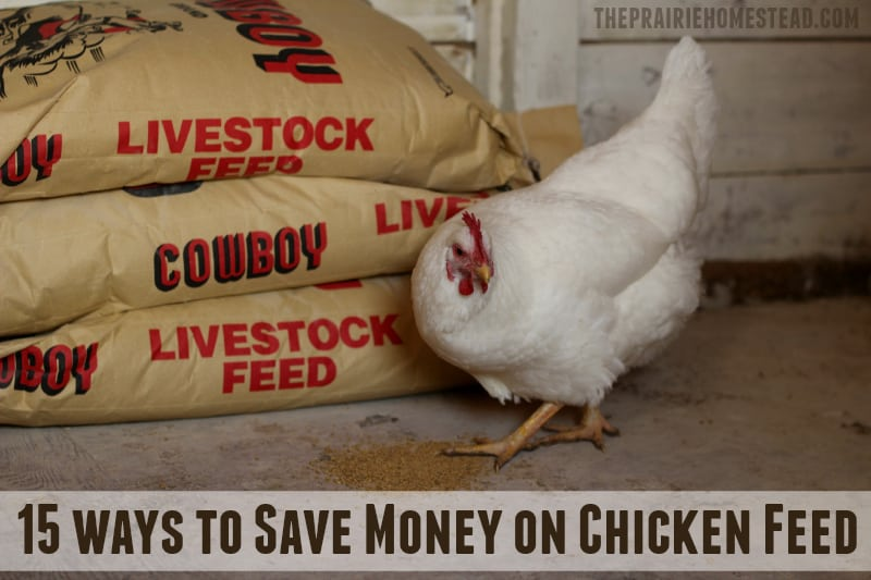How to Save Money on Chicken Feed