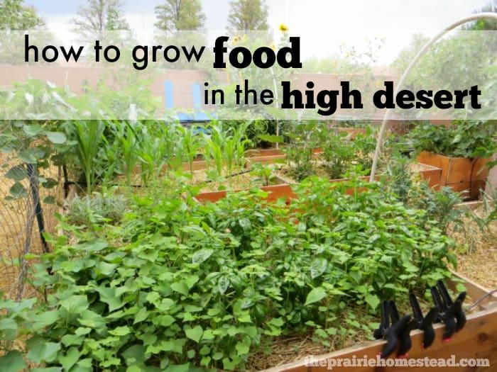 6 Tips for Desert Gardening