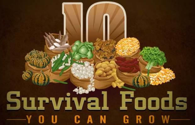 10SurvivalFoods