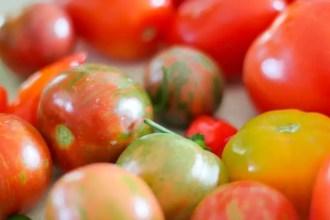 Tomatoes 19